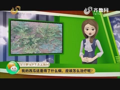 庄稼医院远程会诊:我的西瓜这是得了什么病,应该怎么防治呢?
