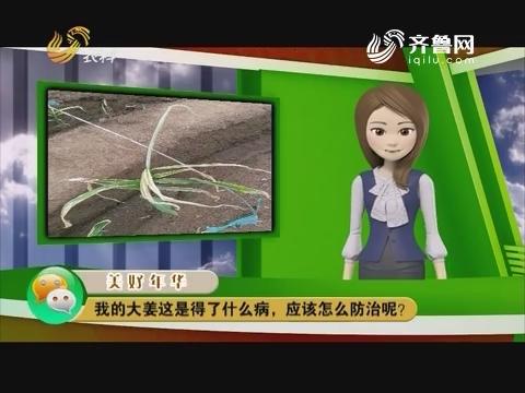 庄稼医院远程会诊:我的大姜这是得了什么病,应该怎么防治呢?