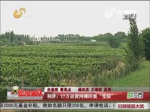 """【走基层 看亮点】利津:17万亩黄河滩区要""""变脸"""""""
