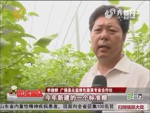【群众新闻】广饶:400万优质种苗打造绿色蔬菜产业