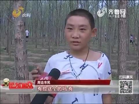 群众新闻:夏日乐趣 高青千人小树林里抓知了猴