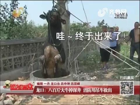龙口:八百斤大牛掉深井 消防用吊车救出