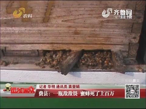 费县:一瓶敌敌畏 蜜蜂死了上百万