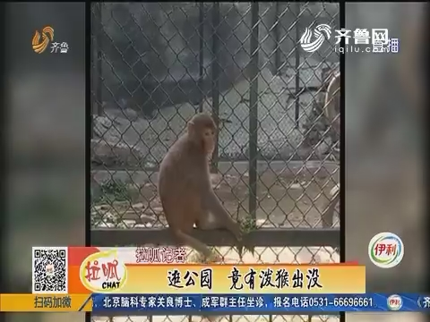 济南:逛公园 竟有泼猴出没