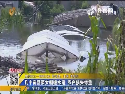 【急事急办】枣庄:几十亩蔬菜大棚被水淹 农户损失惨重