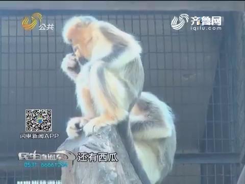 济南:动物园降温出妙招 冰镇美食一箩筐