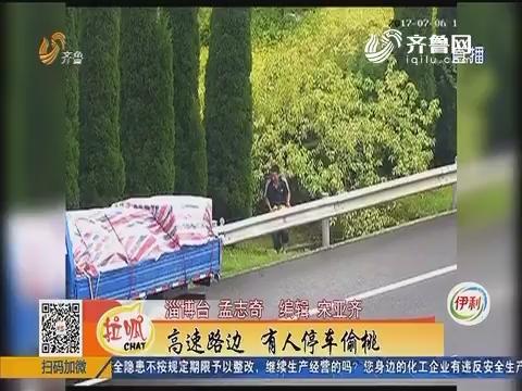 沂源:高速路边 有人停车偷桃