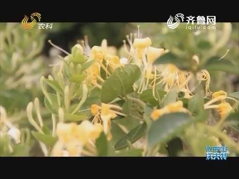 品牌农业在山东 沂蒙山中一枝花
