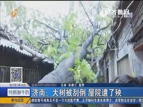 济南:大树被刮倒 屋院遭了殃