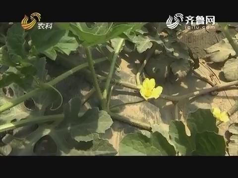 20170717《品牌农资龙虎榜》:40集科普系列片《让土壤更健康》——土壤污染三(上)