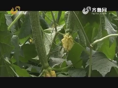 """20170718《品牌农资龙虎榜》:寿光——李炳金的""""镇店之宝"""""""