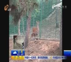 """台湾赠送大陆的梅花鹿""""点点""""诞下健壮公崽"""