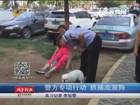 济南:警方专项行动 抓捕流浪狗
