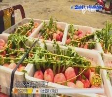 调查:蜜桃打了防腐剂?