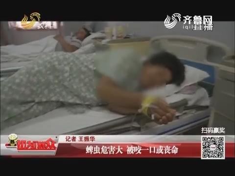 济南:蜱虫危害大 被咬一口或丧命