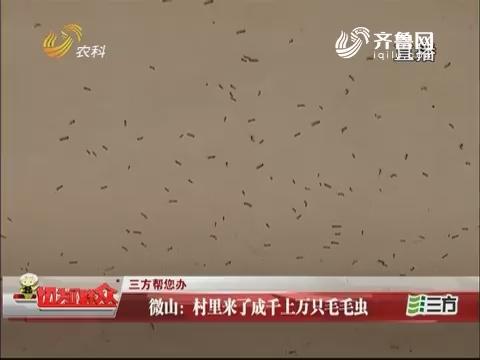 【三方帮您办】微山:村里来了成千上万只毛毛虫