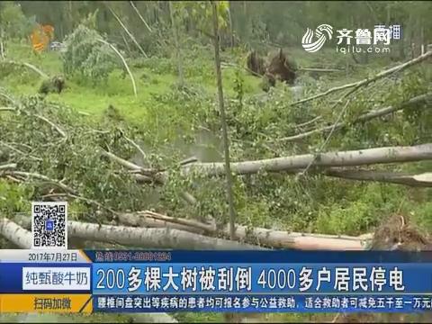 枣庄:风大雨急 几百棵大树被连根拔起