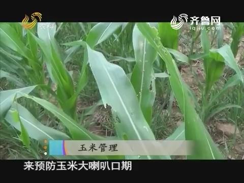 20170730《当前农事》:玉米管理