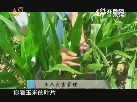 20170731《当前农事》:玉米虫害管理