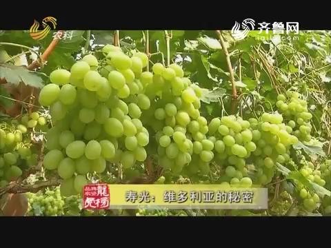 20170731《品牌农资龙虎榜》:寿光——维多利亚的秘密