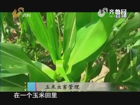 20170801《当前农事》:玉米虫害管理