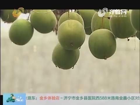 20170801《中国原产递》:罗汉果