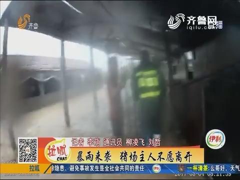 威海:暴雨来袭 猪场主人不愿离开