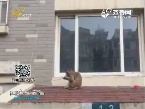 """青岛李沧:""""孙大圣""""进城 与民警斗智斗勇"""
