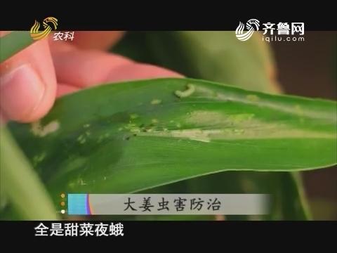20170805《当前农事》:大姜虫害防治