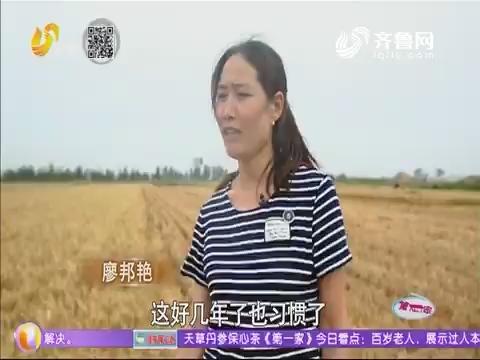 【系列报道:母爱托起强军梦 】 廖邦艳——兵妈妈一个人的过麦