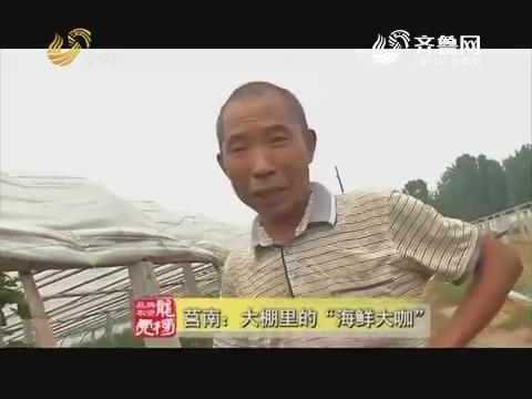 """20170807《品牌农资龙虎榜》:莒南——大棚里的""""海鲜大咖"""""""