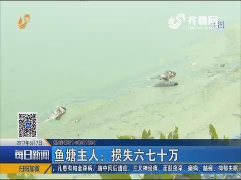 莱芜:大鱼蹊跷死亡 鱼塘被污染?