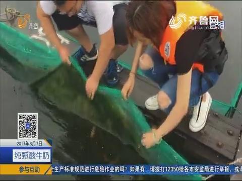 烟台依海优势发展海上粮仓