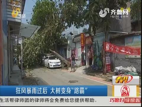 """潍坊:狂风暴雨过后 大树变身""""路霸"""""""