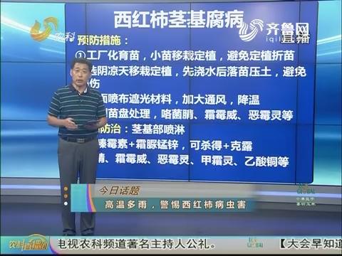 20170808《农科直播间》:高温多雨 警惕西红柿病虫害