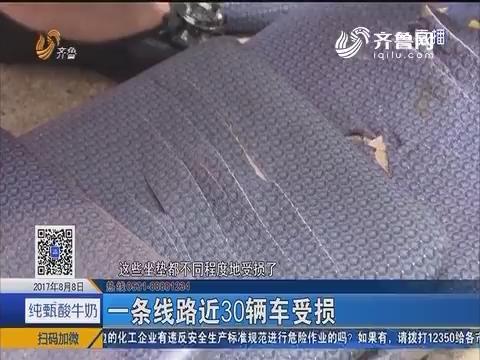 青岛:公交坐垫屡屡遭人恶意划破