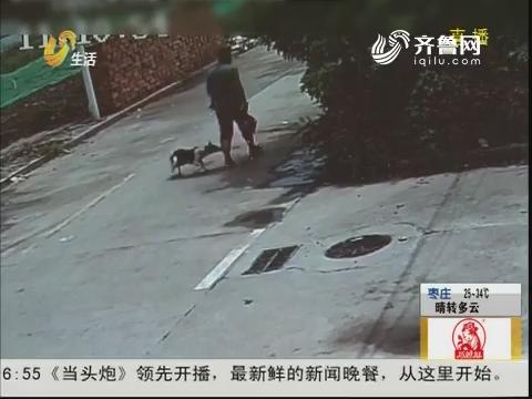 淄博:冤!路遇流浪狗 暴躁咬伤人