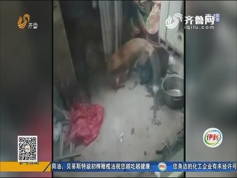 """济南:五只鸡惨遭""""毒手"""" 到底是谁干的?"""