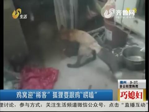 """济南:鸡窝迎""""稀客"""" 狐狸要跟鸡""""唠嗑"""""""