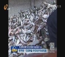 【牢记总书记嘱托 奋力走在前列 喜迎党的十九大】东平湖:生态养鱼 环保经济效益双赢