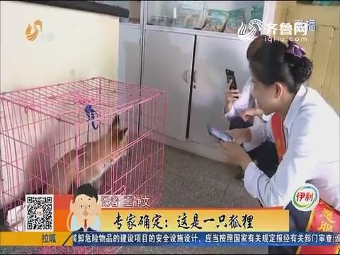 """济南:逮到了!吃鸡的""""家伙""""逮到了!"""