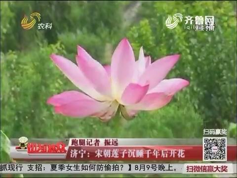济宁:宋朝莲子沉睡千年后开花