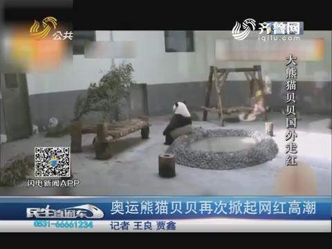 青岛:奥运熊猫贝贝再次掀起网红高潮