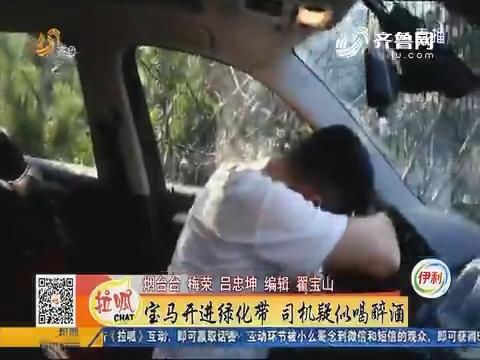 烟台:宝马开进绿化带 司机疑似喝醉酒