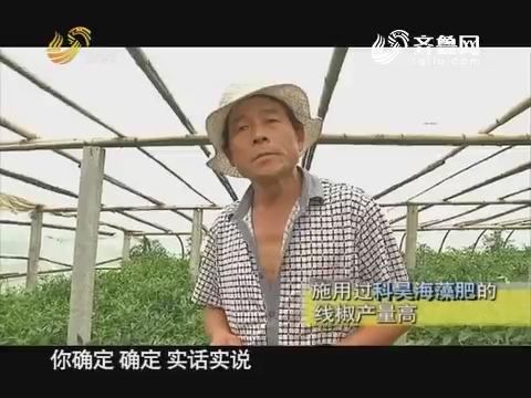 """20170815《品牌农资龙虎榜》:莒南 大棚里的""""海鲜大咖"""""""