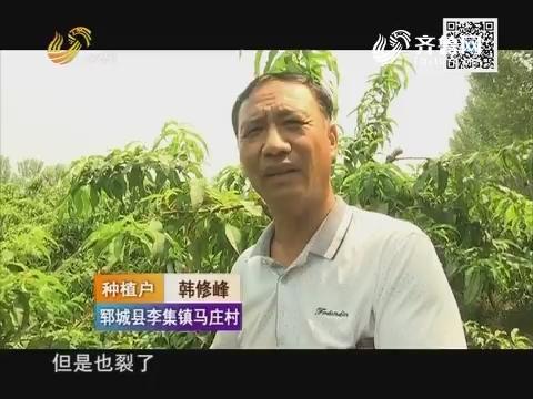 """桃子""""龇牙咧嘴""""桃农损失六十万"""