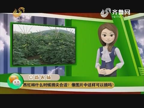 庄稼医院远程会诊:西红柿什么时候摘尖合适?像图片中这样可以摘吗?