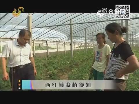 西红柿栽植须知