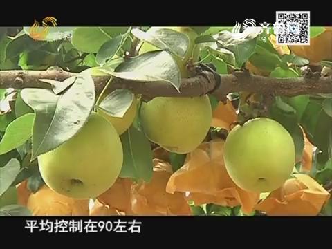 农大腐植酸 挑战吉尼斯:用上农大肥 梨园产量四连增