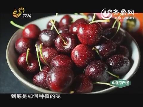20160207《中国原产递》:车厘子